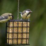 Celoroční dokrmování ptáků – urážky, mýty a fakta v české kotlině