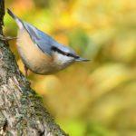 Kvalitní ptačí restaurant by měl nabízet pestrou stravu