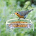 Proč se mé zahradě ptáci vyhýbají?