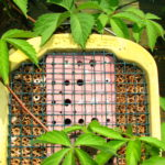 Vybíráme domek pro včelky samotářky
