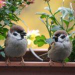Krmíme ptáky na balkoně