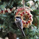 Dárky pro vaše blízké i pro přírodu nejen na Vánoce