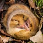 Hibernace aneb Jen tak v klidu zaspat zimu
