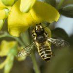 Další a další úly pro včely medonosné. Opravdu je to pomoc přírodě?