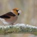 TOP 20 ptáků na krmítku