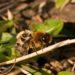 Co se děje v hnízdě včelky samotářky?