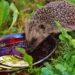 Pomoc ježkům není žádná věda