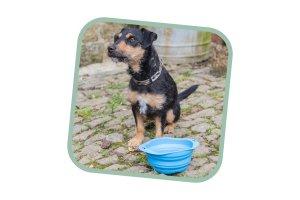 Cestovní miska pro psa Beco bowl L