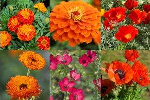 Gerilová směs pro výraznou zahradu