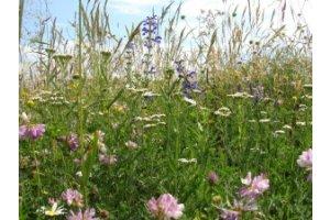 Semínková směs Luční květy na dosetí 10g