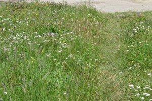 Semínková směs Zelený chodníček 10g